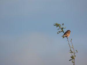 Observación de aves España