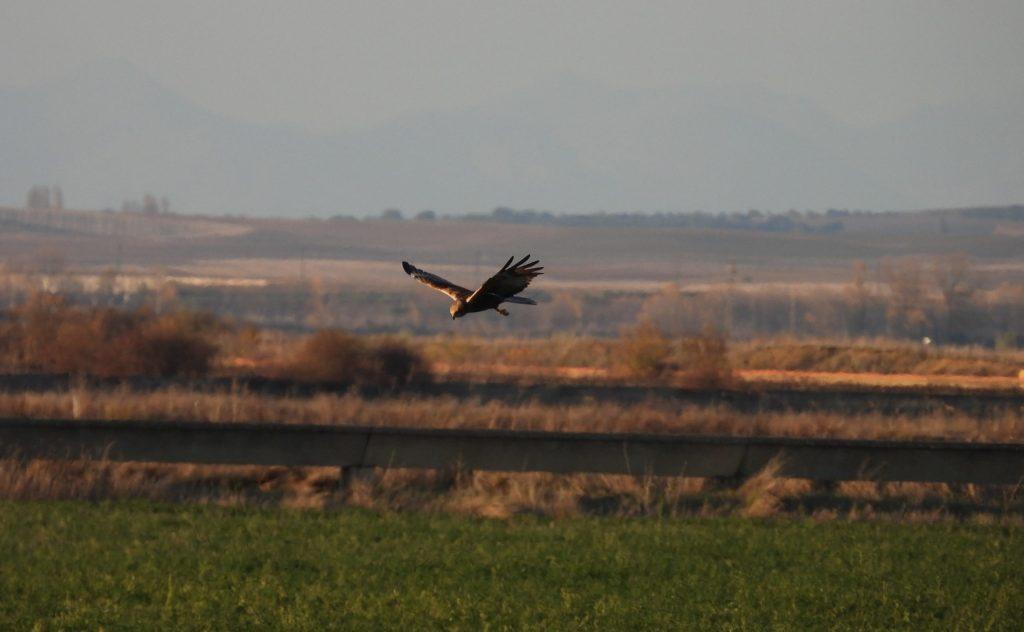 Observación y avistamiento de aves en Palencia